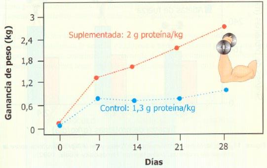 Efecto del incremento de la proteína de la dieta sobre la ganancia de peso corporal tras cuatro semanas de entrenamiento de fuerza. (Tomado de González Gallego et al. 2006. Nutrición en el deporte. Ayudas ergogénicas y dopaje)
