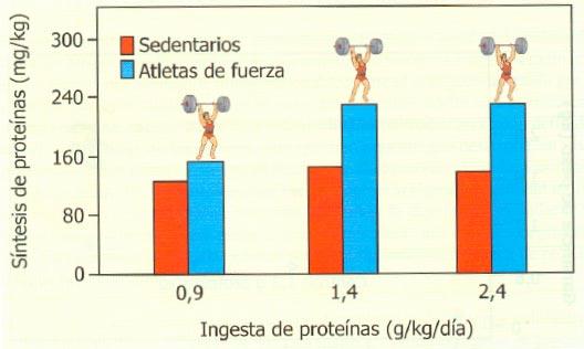 Efecto del entrenamiento de fuerza y la ingesta proteica sobre la síntesis de proteínas (Tomado de González Gallego et al. 2006, Nutrición en el deporte. Ayudas ergogénicas y dopaje)